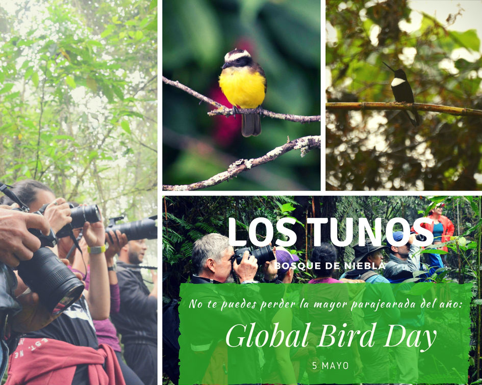 Global Bird Day i