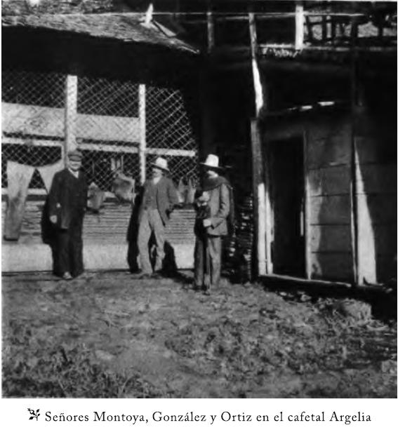 Los señores Montoya, González y Ortíz en la plantación de café Argelia en Viotá